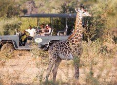 Marula Lodge - Game drives
