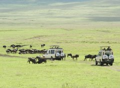 Migration on safari in the Serengeti with Mauly Tours