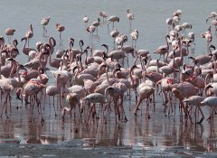 Flamingos in Tanzania's Lake Natron with Mauly Tours
