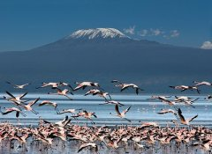 Memory Safaris in Tanzania and Tour Operator in Arusha