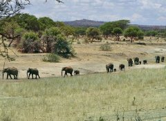 With Memory Safaris at Tarangire National Park