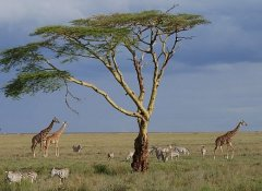 Game watching with Memory Safaris in the Serengeti