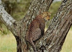 Game viewing with Memory Safaris in Ruaha National Park