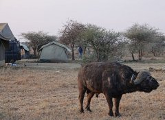 Camping safari with Northland Tanzania Safaris Ltd