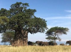 Game drive with Northland Tanzania Safaris Ltd