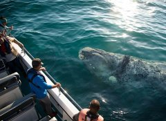 Up close whale watching in Knysna with Ocean Odyssey