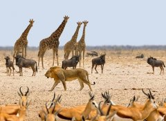 Safari in Etosha with a rental car from Odyssey Car Hire