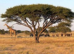 Tailor-made self-drive Ondese Safaris in Southern Africa