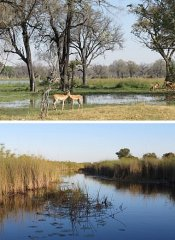 Game watching and tours in Botswana with Ondese Safaris