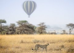 Safari By Z 's tailored dream holiday in the Serengeti