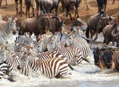 View the migration on a Safari By Z based in Zanzibar