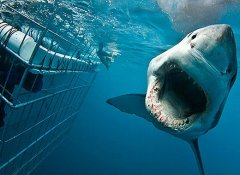 Shark Bookings and shark cage diving in Gansbaai