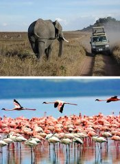 Shidolya Tours and Safaris and birding in Tanzania