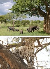 Find the Big Five with Shizi Safaris in Tanzania