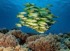Reef diving in Zanzibar with the TGI Diving center