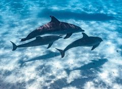 Diving with dolphins at the Mnemba Atoll with TGI Diving