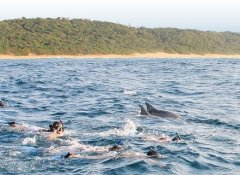 The Dolphin Centre, Activities in Ponta do Ouro