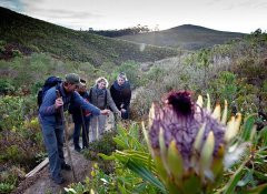 The Fynbos Trail Activities and Hiking in the Overberg