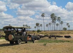 Uhuru Travel & Tours Ltd, Travel and Safaris in Tanzania