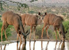Unique Tours & Safaris, Self-drive Tours in Namibia