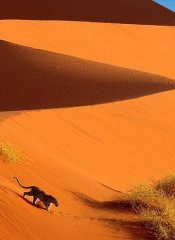 Game viewing in the Namib dunes with Wild Dog Safaris