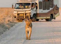 Wild Dog Safaris in Namiba and game viewing in Etosha