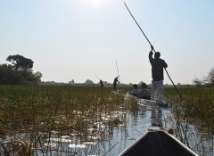 At the Okavango Delta on Wild Dog Safaris in Botswana