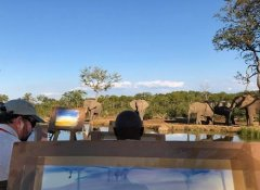Wild Horizons, Activities & Adventures in Victoria Falls