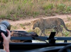 Game viewing in Tanzania on World Unite's active travels